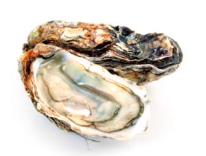 CA Community Oyster Roast